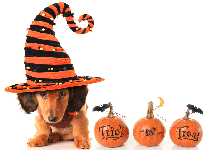 Puppy in Costume Next to 'Trick or Treat'